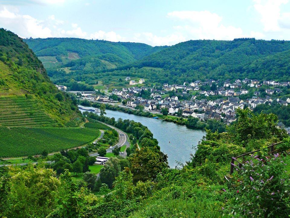 Vineyard in Cochem, Germany