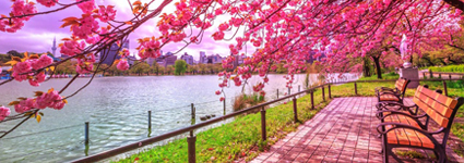 Which Are A Few Of The Best Parks To Visit In Tokyo